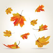 Multicolored autumn leaves falling