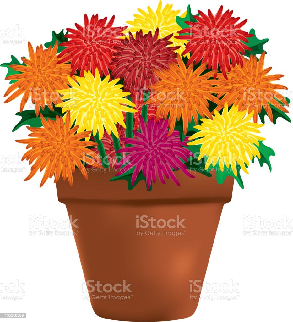 Multi Colored Chrysanthemums In A Clay Pot Vector Art Illustration
