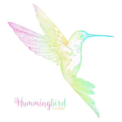 Multicolored Watercolor Bee Hummingbird Isolated. Hand Painted Clip Art Design Element.