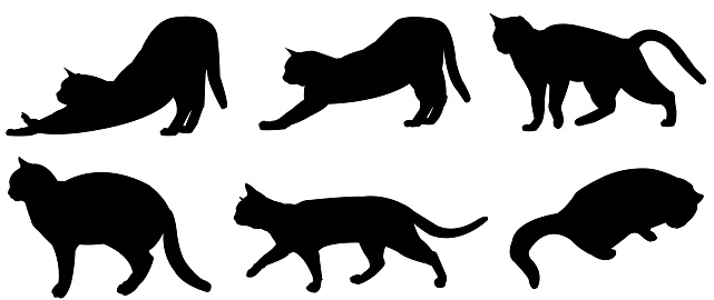 Multiple Cats Vector