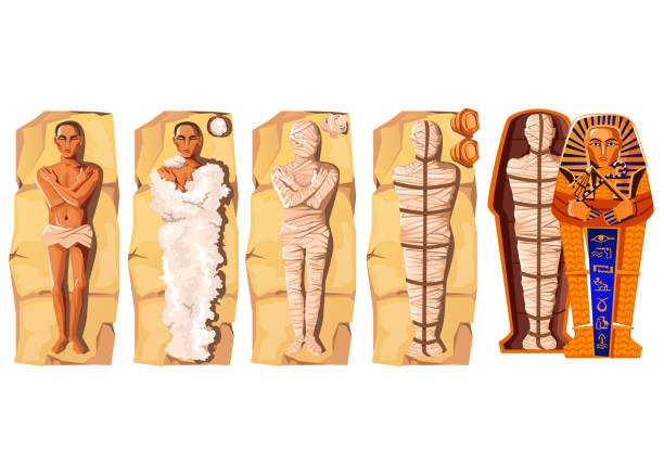 Mummy creation cartoon vector illustration Mummy creation cartoon vector illustration. Stages of mummification process, embalming dead body, wrapping it with cloth and placing in Egyptian sarcophagus. Traditions of ancient Egypt, cult of dead ancient egyptian culture stock illustrations