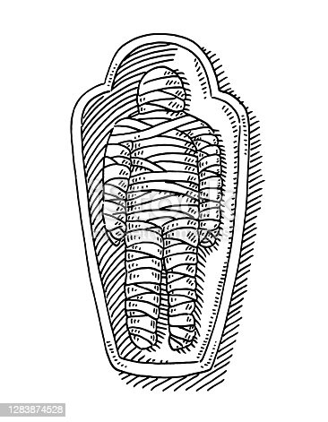 istock Mummy In Sarcophagus Drawing 1283874528