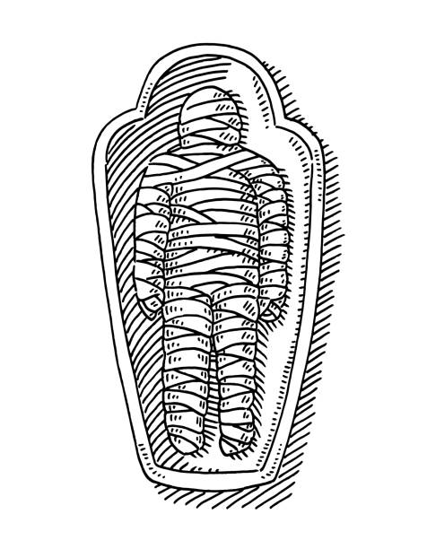Mummy In Sarcophagus Drawing Hand-drawn vector drawing of a Mummy In a Sarcophagus. Black-and-White sketch on a transparent background (.eps-file). Included files are EPS (v10) and Hi-Res JPG. cartoon character figure stock illustrations