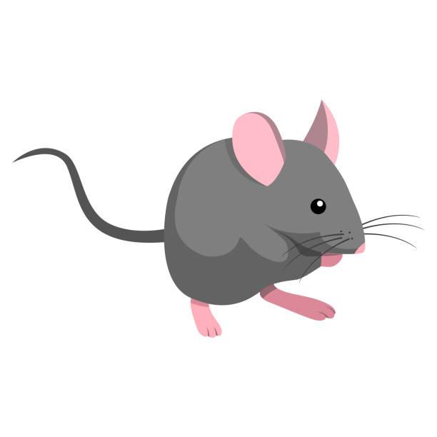 Mus Illustrationen visar en mus mouse animal stock illustrations