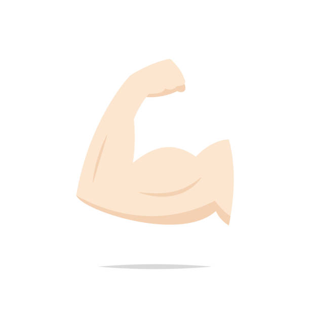 Muscle arm bicep icon vector vector art illustration