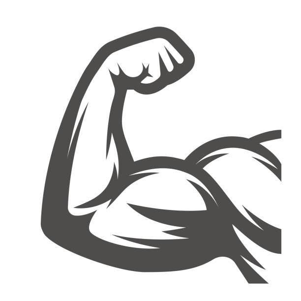 Muscle arms. Biceps vector art illustration