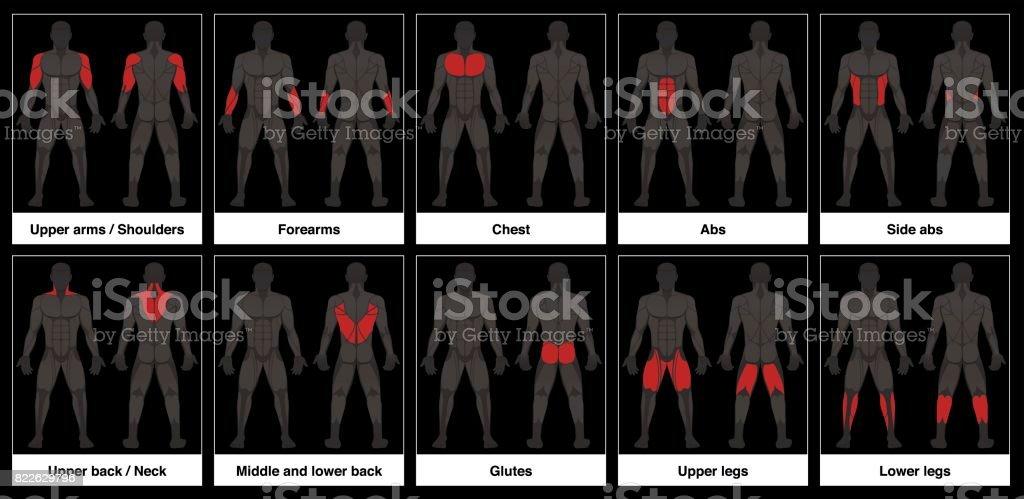Muskeldiagramm Männlichen Körper Vordere Und Hintere Ansicht Mit ...
