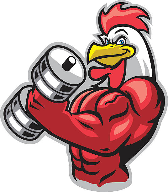 muscle rooster holding the barbell - cartoon muscle arms stock illustrations, clip art, cartoons, & icons