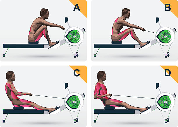 Muskel auf Rudern macine – Vektorgrafik