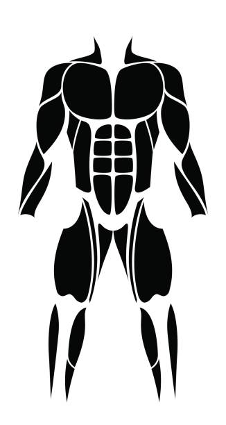 Muscles - abstract black figure or icon of the largest human muscles - isolated vector illustration on white background. vector art illustration