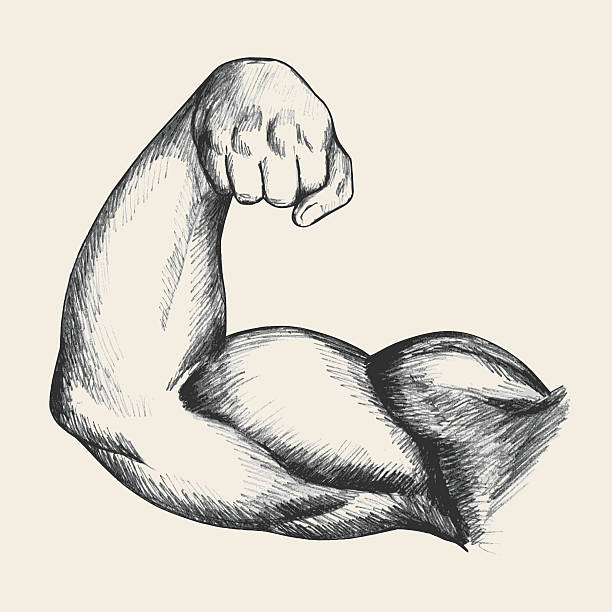 Muscular Human Arm Sketch illustration of muscular human male right arm from front view human muscle stock illustrations