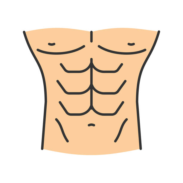 Muscular male torso icon vector art illustration