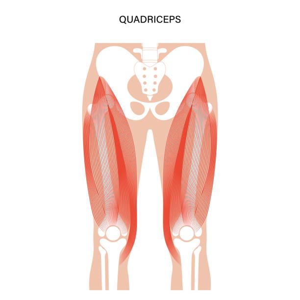筋肉系の脚 - 足点のイラスト素材/クリップアート素材/マンガ素材/アイコン素材