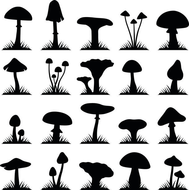 머시룸 및 토드스툴 - 버섯 stock illustrations