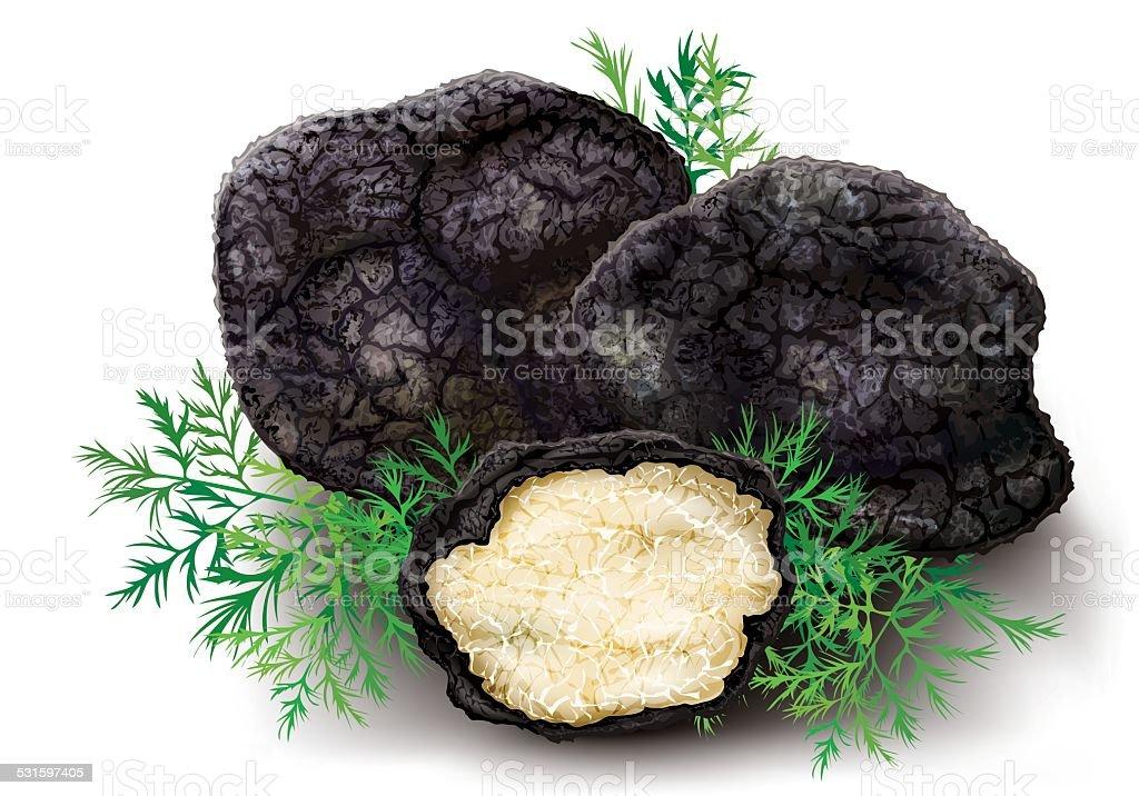 Mushroom black truffle vector art illustration