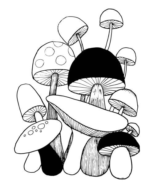 버섯 낙서 색칠 공부벡터. 흰색 배경에 격리 된 그림입니다. 벡터 아트 일러스트