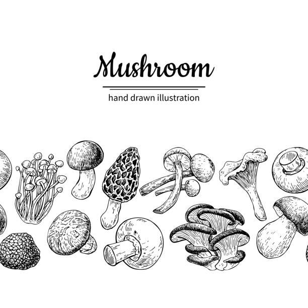 버섯 드로잉 벡터 seamlees 테두리입니다. 격리 된 음식 프레임 s - 버섯 stock illustrations