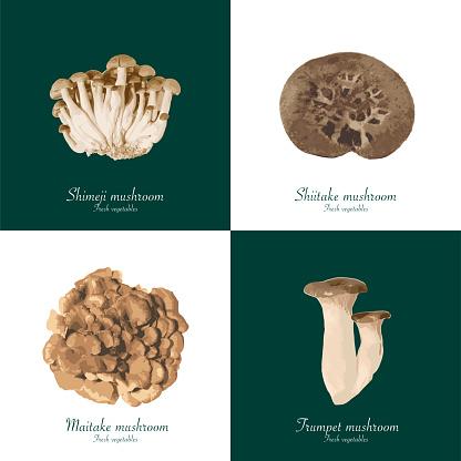 mushroom from background of white and dark green