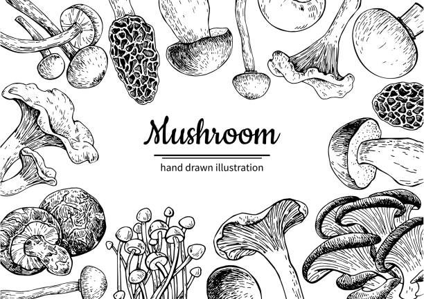 버섯 손으로 그려 벡터 프레임. 격리 된 스케치 유기농 식품 d - 버섯 stock illustrations