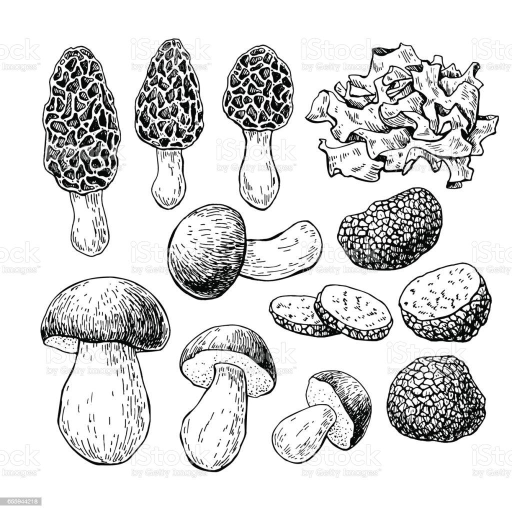 Pilz Handgezeichneten Vektorillustration Skizze Kuche Zeichnen Iso
