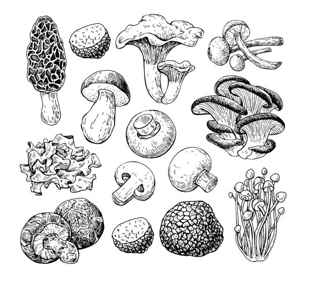 ilustrações de stock, clip art, desenhos animados e ícones de mushroom hand drawn vector illustration. sketch food drawing iso - cogumelos