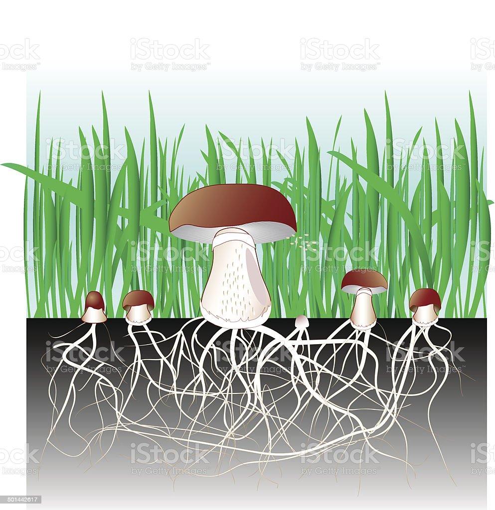 Champignons et de v g tation luxuriante champignon for Design reproduktion