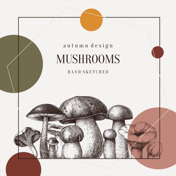 버섯 콜라주 - 버섯 stock illustrations