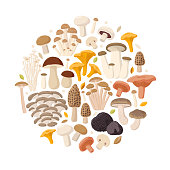 Edible Mushrooms big collection of vector flat illustrations isolated on white background composed in round. Cep, chanterelle, honey agaric, enoki, morel, oyster mushrooms, King oyster, shimeji, champignon, shiitake, black truffle.