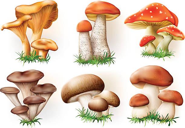 버섯 컬레션 - 버섯 stock illustrations