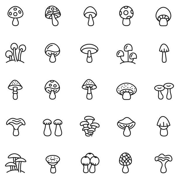 버섯 아이콘 세트 - 균류 stock illustrations