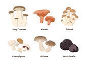 Mushrooms set of vector illustrations in flat design isolated on white background. King oyster, niscalo, shimeji, champignon, shiitake, black truffle edible mushrooms, infographic elements.