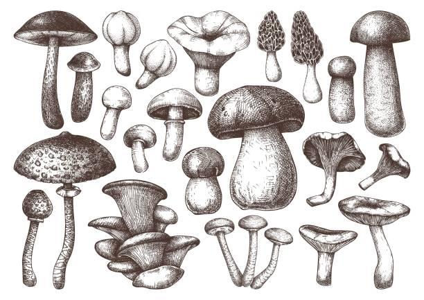버섯 세트 - 버섯 stock illustrations