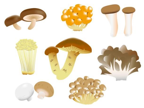 一種 (食用) いろいろ - しめじ点のイラスト素材/クリップアート素材/マンガ素材/アイコン素材