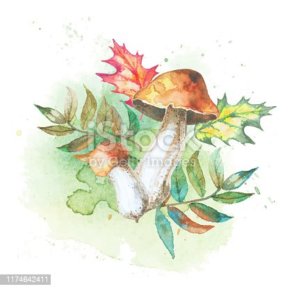 Mushrooms with autumn leaves. Watercolor illustration. Vector.
