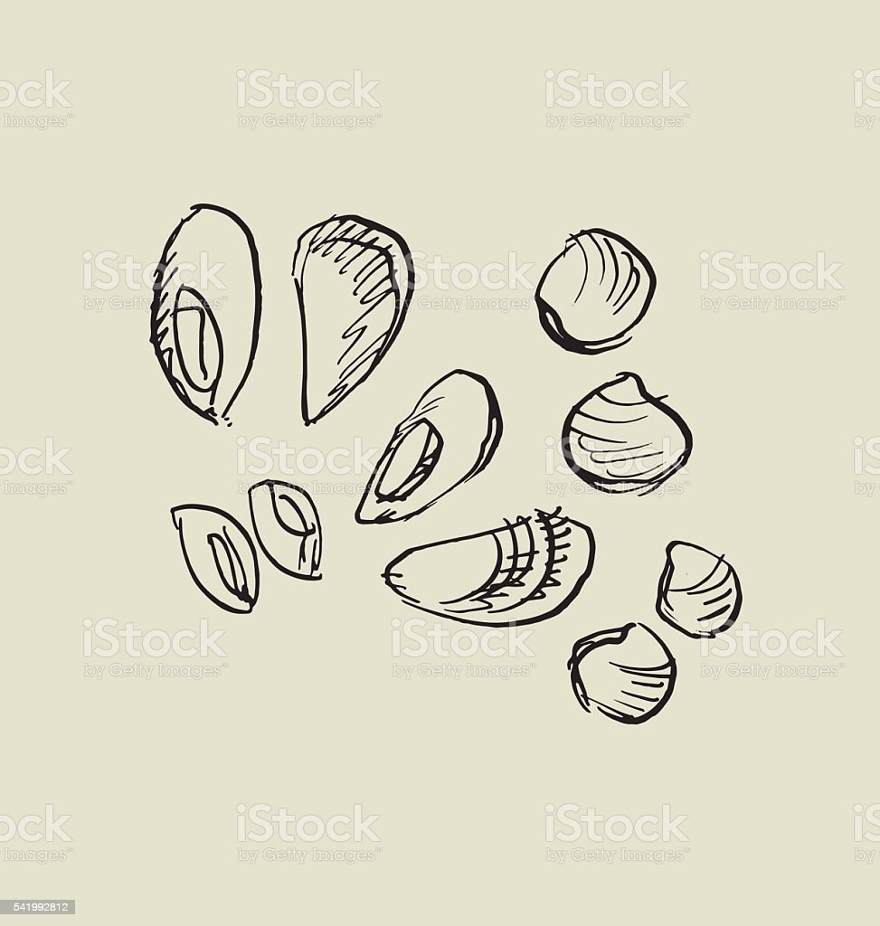 mussel, and shell icon. vector art illustration