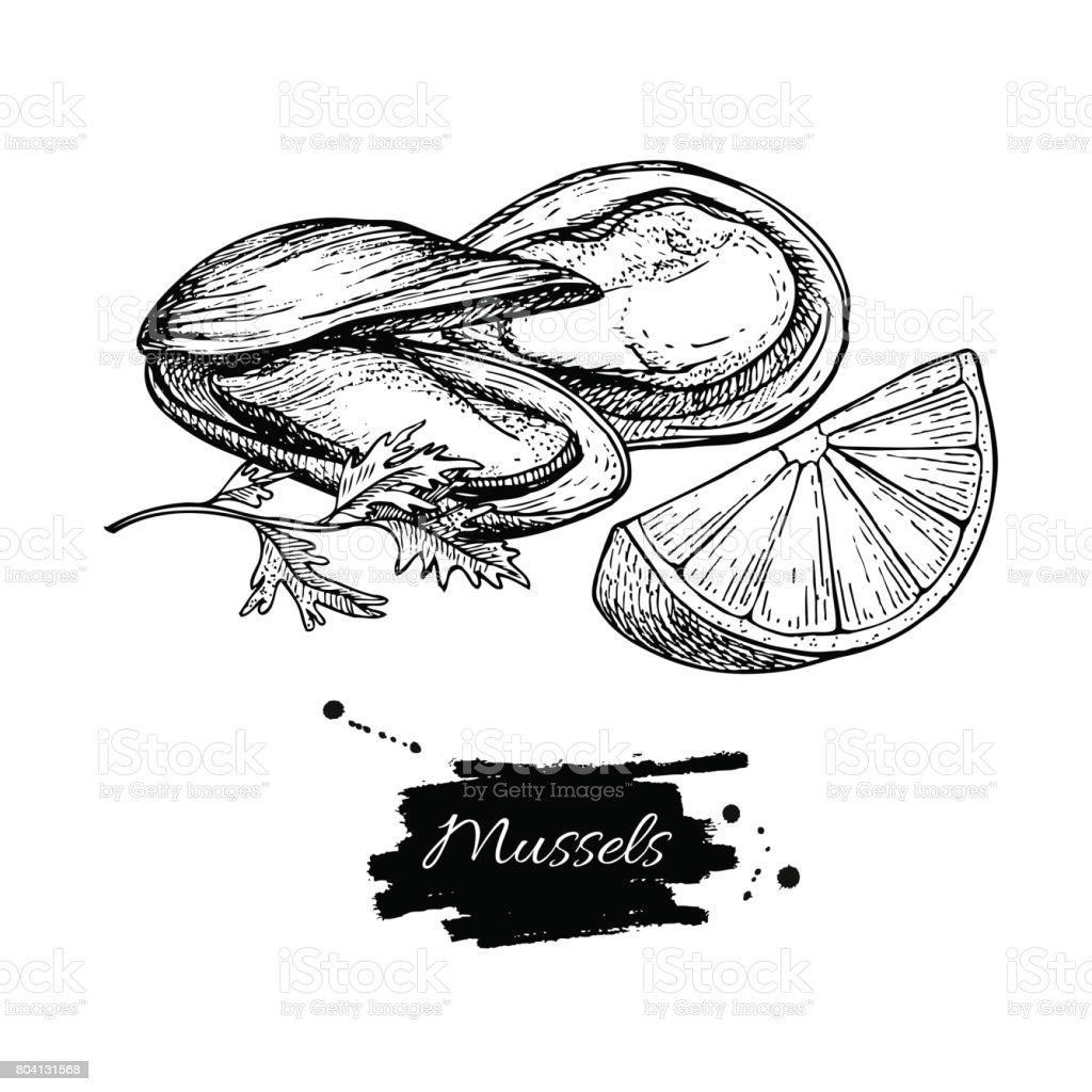 Ilustración de Mano De Mejillón Dibujado Vector Ilustración Grabado ...