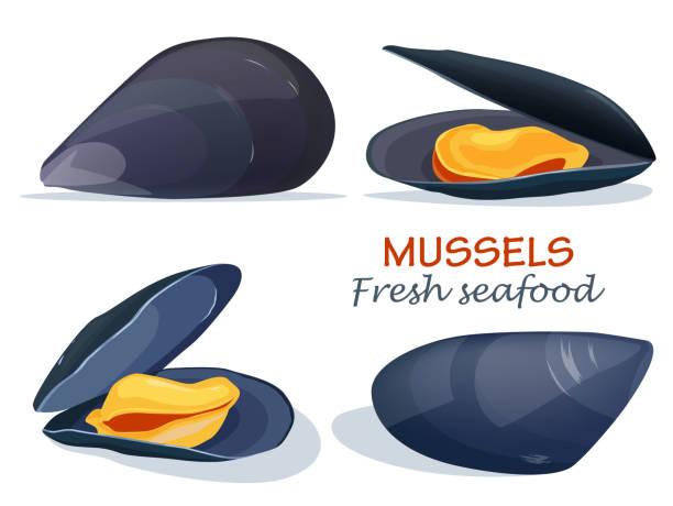 Mussels fresh seafood Mussels fresh seafood mollusk stock illustrations
