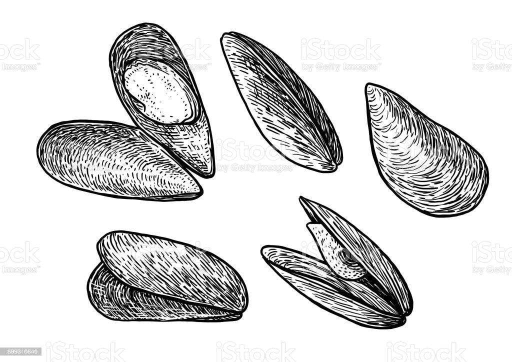 Ilustración de Ilustración De Mejillones Dibujo Grabado Tinta Arte ...