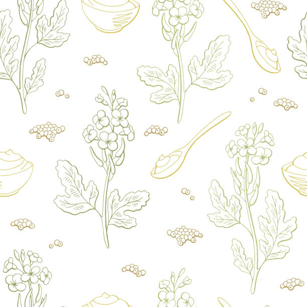Collection Of Mustard Vector Illustrations: Mustard Seeds, Flower,..  Royalty Free Cliparts, Vectors, And Stock Illustration. Image 136814819.