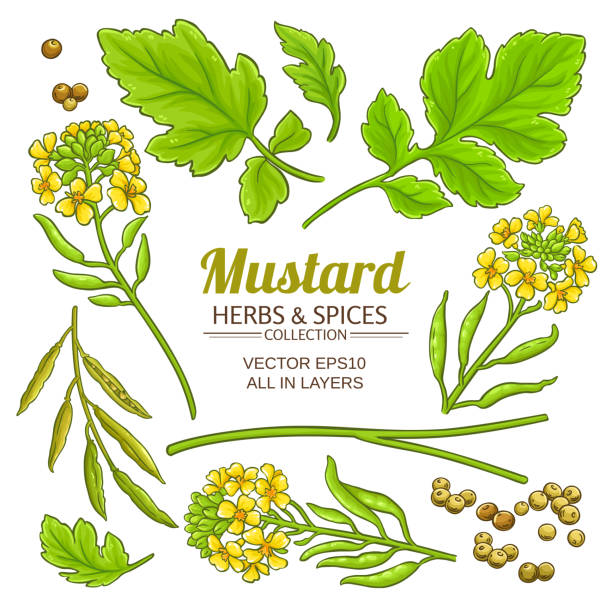 Free Clipart Of A mustard plant