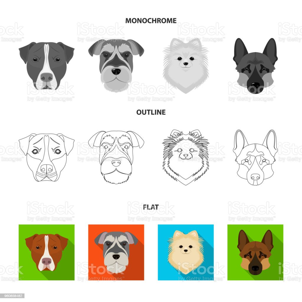 Muzzle of different breeds of dogs.Dog breed Stafford, Spitz, Risenschnauzer, German Shepherd set collection icons in flat,outline,monochrome style vector symbol stock illustration web. vector art illustration