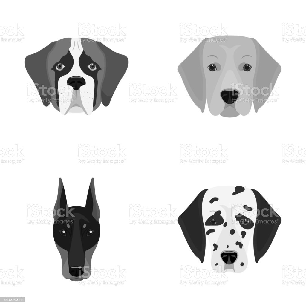 Muzzle of different breeds of dogs.Dog of the breed St. Bernard, golden retriever, Doberman, Dalmatian set collection icons in monochrome style vector symbol stock illustration web. vector art illustration