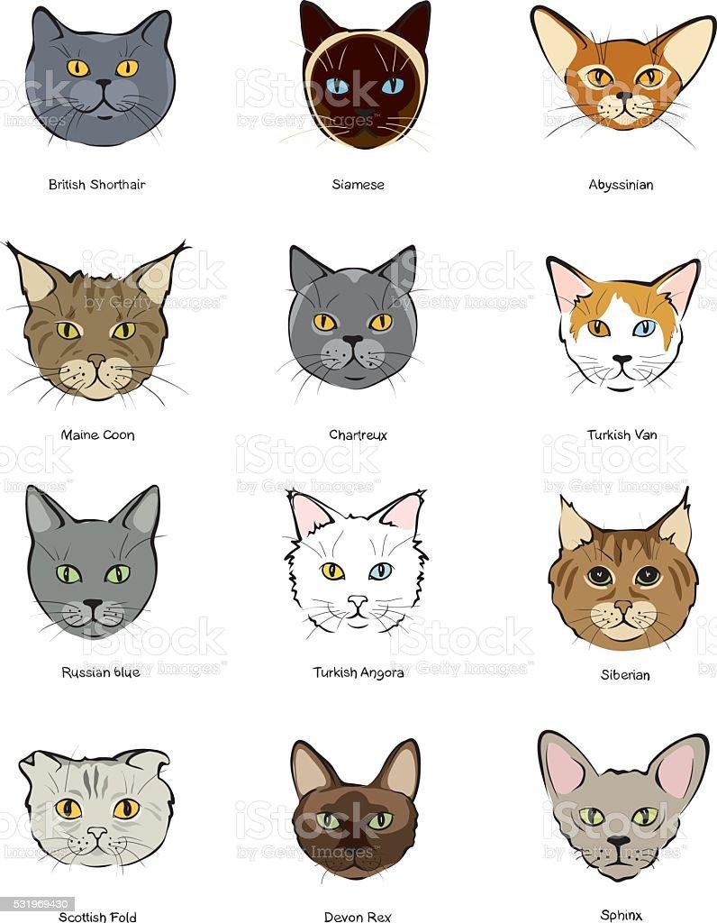 Усы котенка кота морды Canidae, котенок, млекопитающее, лицо png ... | 1024x796