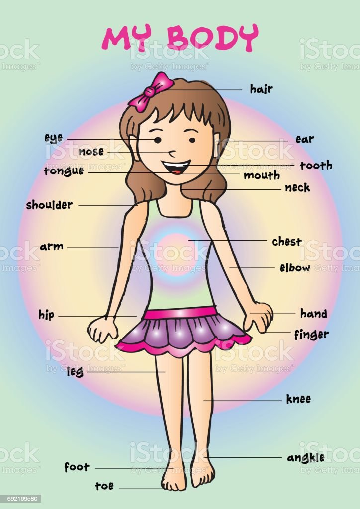 My Body Educational Info Graphic Chart For Kids Showing Parts Of