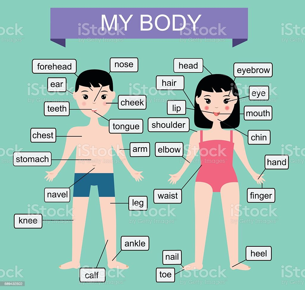 My Body Educational Vector Illustration For Kids Children