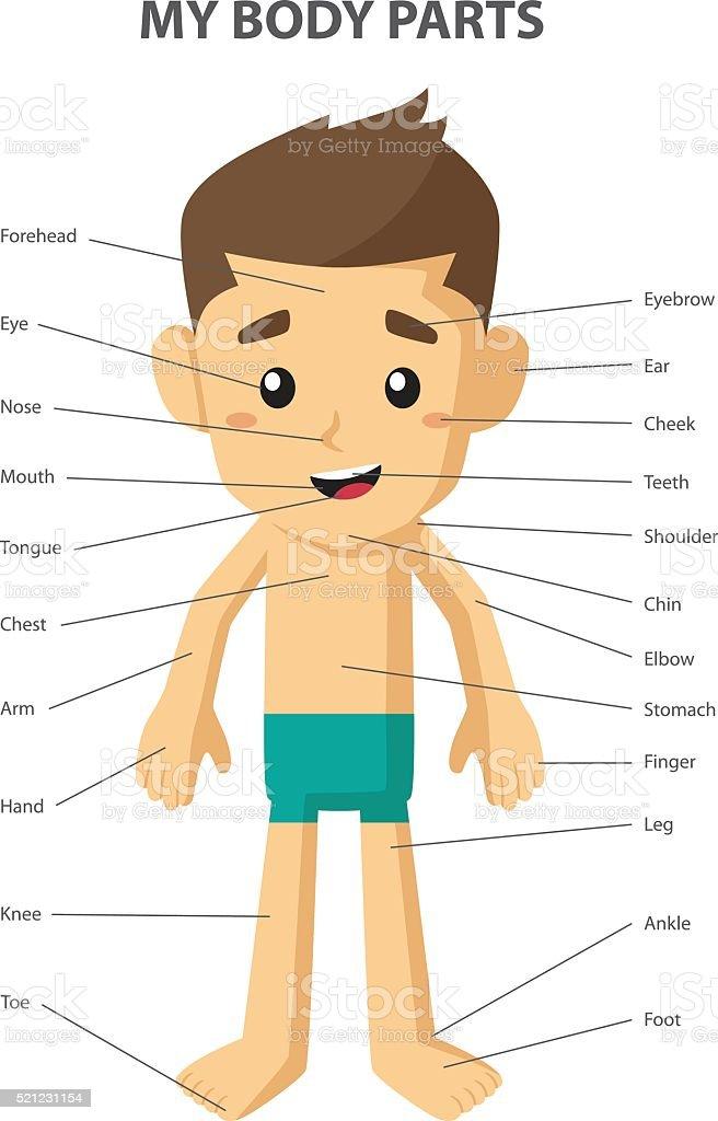 Großartig Teile Des Körpers Zeitgenössisch - Menschliche Anatomie ...