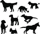 My dogs (vector & jpg)