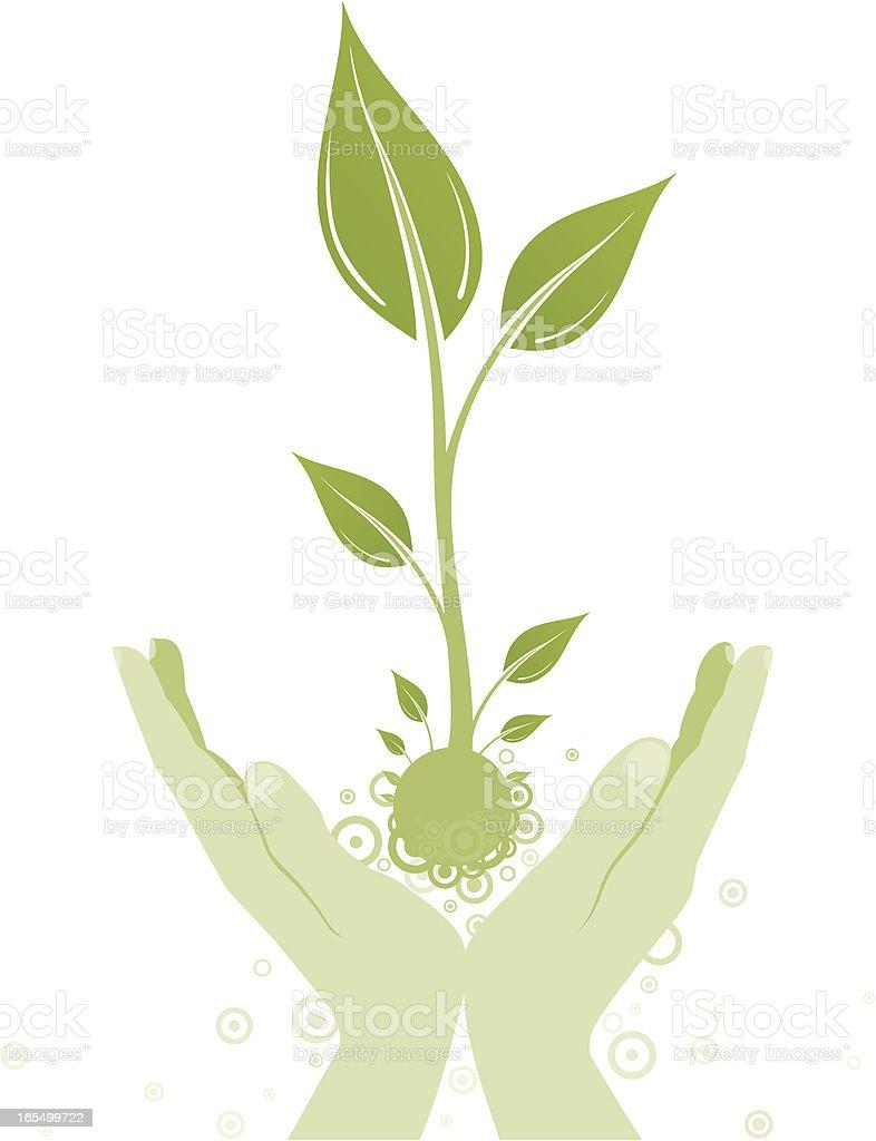 My plant. royalty-free stock vector art