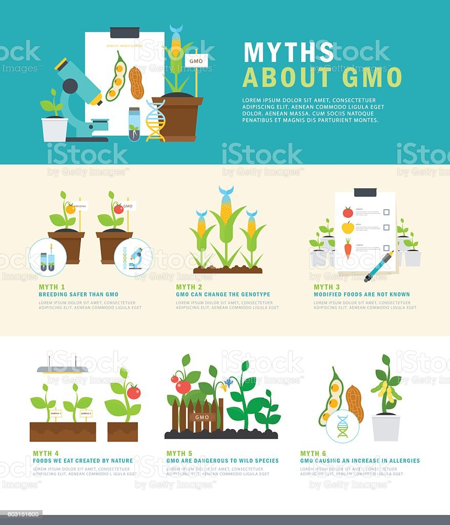 Myths about GMO. Colorful vector infographic with illustrations and simple vector art illustration