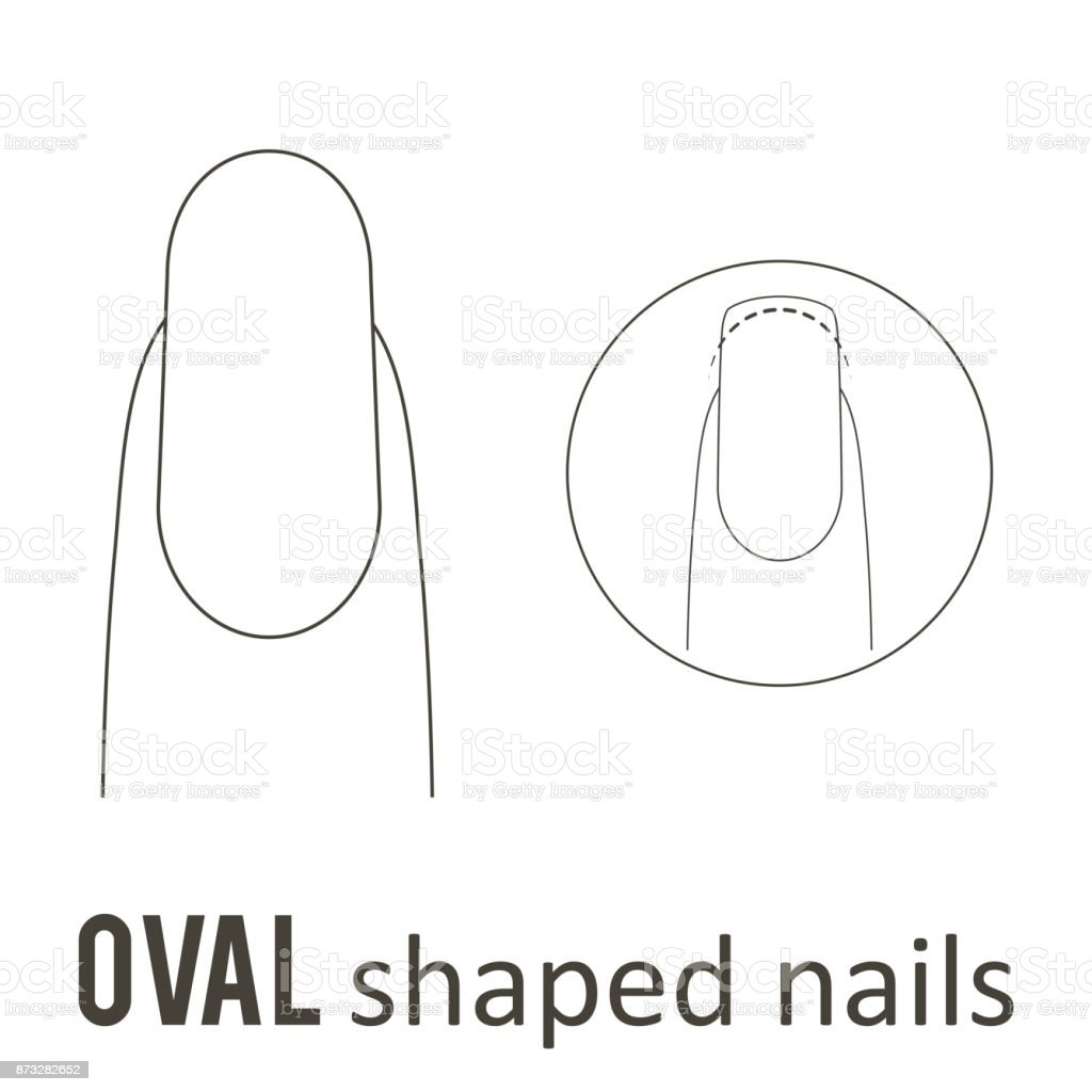 Nail shape oval stock vector art more images of art 873282652 nail shape oval royalty free nail shape oval stock vector art amp more images pooptronica Choice Image